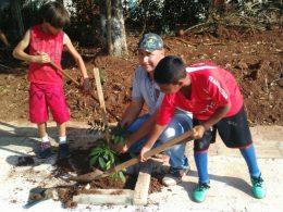 Plantio de árvores frutíferas embeleza ainda mais o calçamento da localidade de Esquina Penz