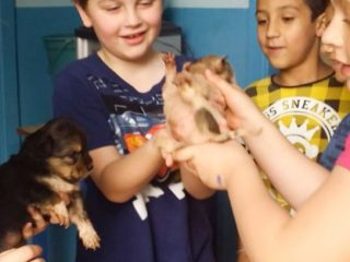 Osvalda, a cachorra mascote exemplo de afetividade na escola